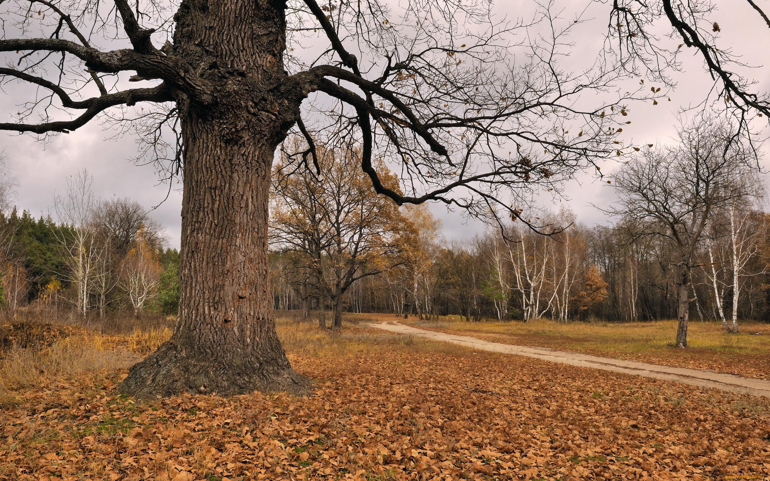 Домашние растения фото и названия мини деревья под